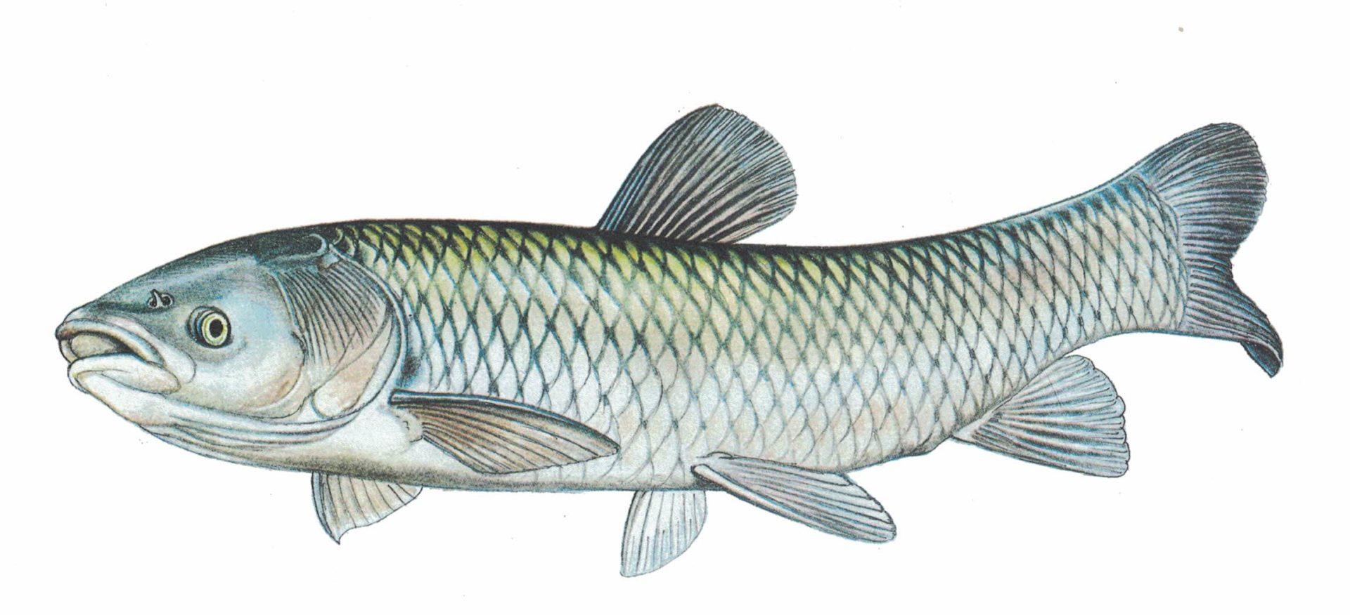 Rybářské články